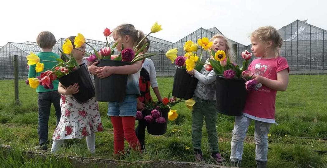 Tulpen plukken bij de Zomerbloemen Pluktuin tijdens Pasen. Met bol en al. Foto: Zomerbloemen Pluktuin © Anne-Marie Fontijn