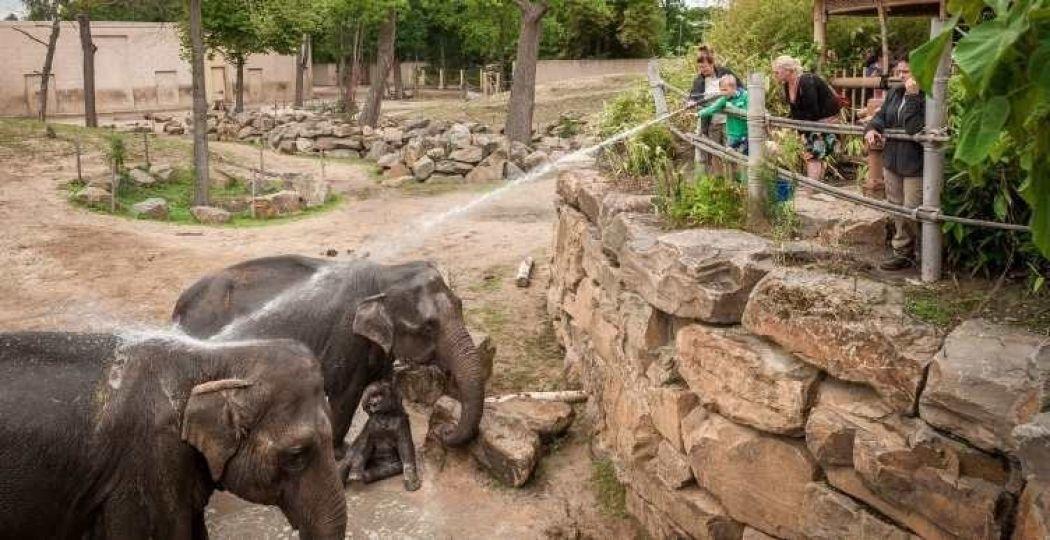 Geniet van een dagje uit in de dierentuin! Foto: Dierenpark Planckendael