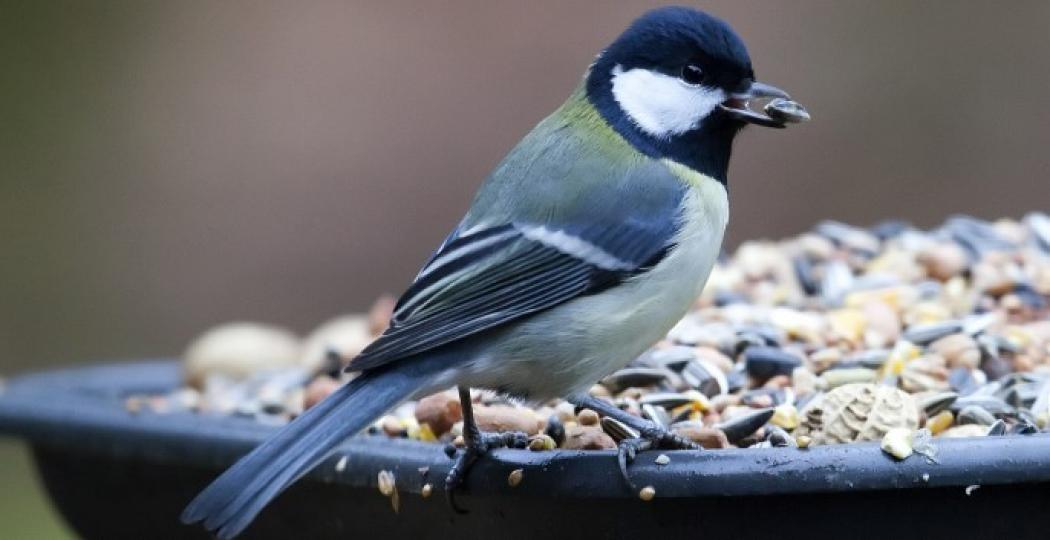 Help de vogels de winter door. Foto:  Flickr / Maarten Visser ,  CC by-sa 2.0