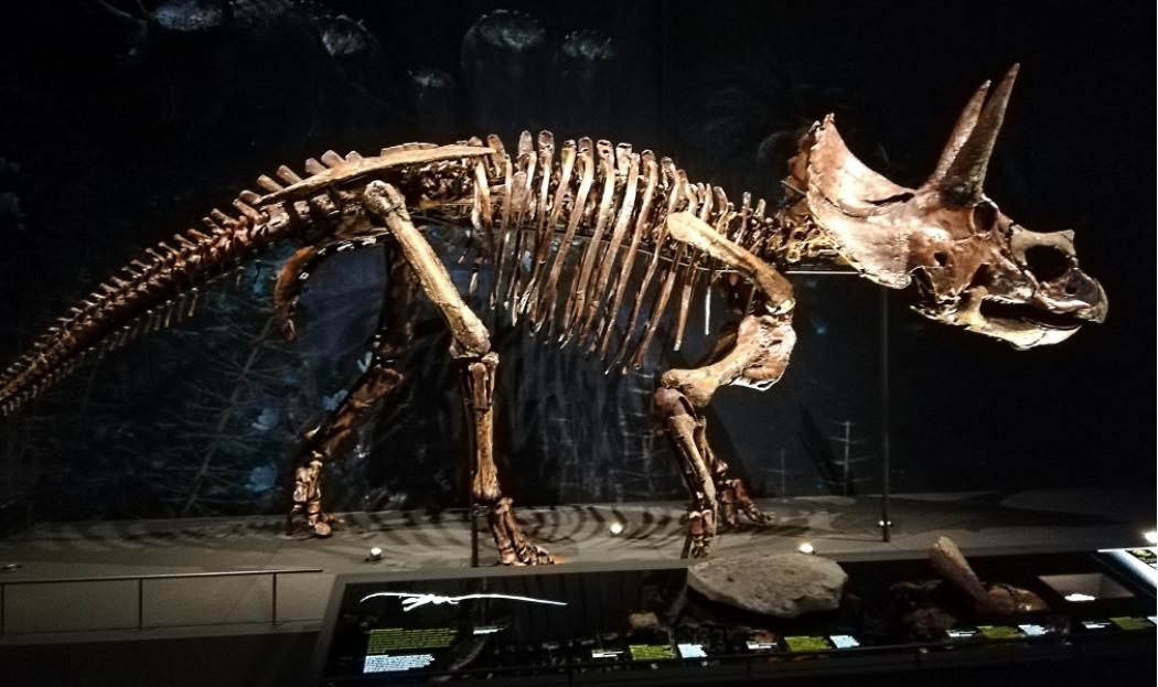 Deze triceratops is een van de vele dinosaurussen die te zien is in de Dinozaal van het vernieuwde Naturalis. Foto: DagjeWeg.NL.