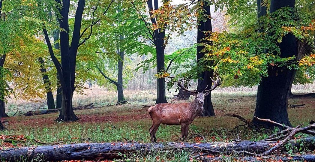 Ontdek de natuur in  Nederland en ga ook eens naar de minder bekende natuurgebieden. Je vindt ze met een handige app. Foto: DagjeWeg.NL © Nikki Arendse