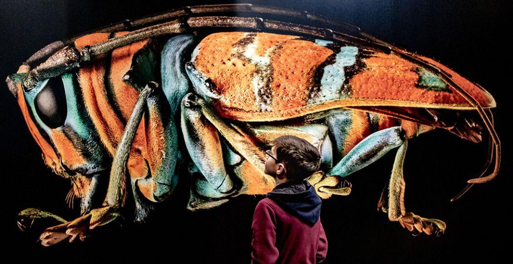 Op Expositie Microsculpture zie je insecten zoals je ze nog nooit hebt gezien. Foto: Focuss22 – Jean Pierre Geussens