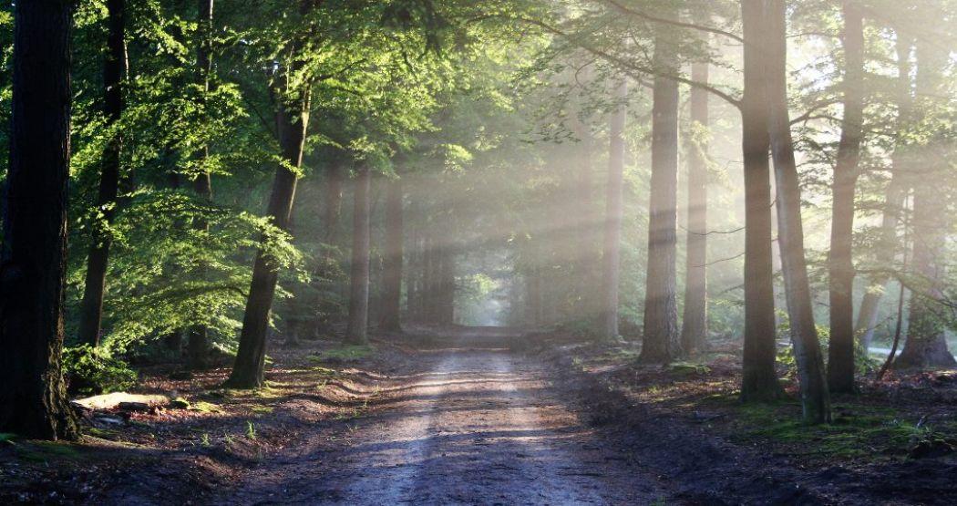 Vind rust in de natuur. Foto:  Pexels.com