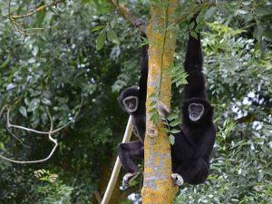 Foto: Familiepark Mondo Verde.