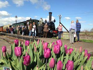 Rijden door het kleurrijke tulpenveld. Foto: Museumstoomtram Hoorn-Medemblik.