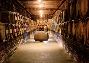 Proef en ontdek wijn in het Nederlands Wijnmuseum