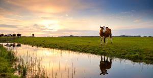 Kriebels voor het platteland: 5x eropuit