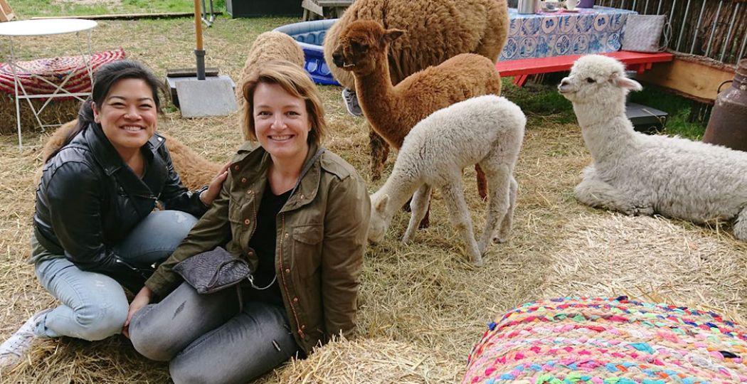 Een onvergetelijke ervaring: theeleuten tussen de alpaca's. Foto: DagjeWeg.NL.