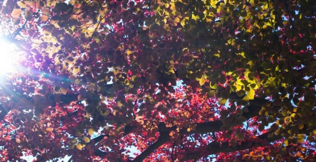 Prachtige kleuren! Foto:  https://www.flickr.com/photos/henrivk ,  CC BY-SA 2.0