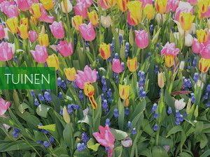 Floratuin Julianadorp