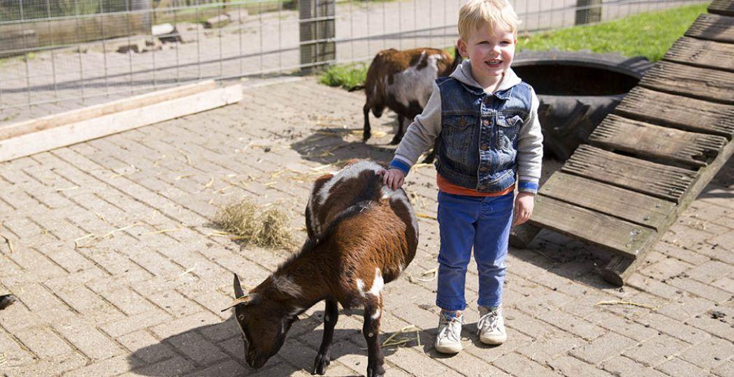 Spelen en knuffelen met de dieren op de kinderboerderij bij speelboerderij De Flierefluiter. Foto: De Flierefluiter.