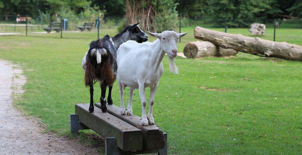 Een kinderboerderij is altijd een feestje voor peuters en kleuters. Allemaal schattige dieren en vaak is er ook een speeltuin bij. Foto: DagjeWeg.NL / Coby Boschma