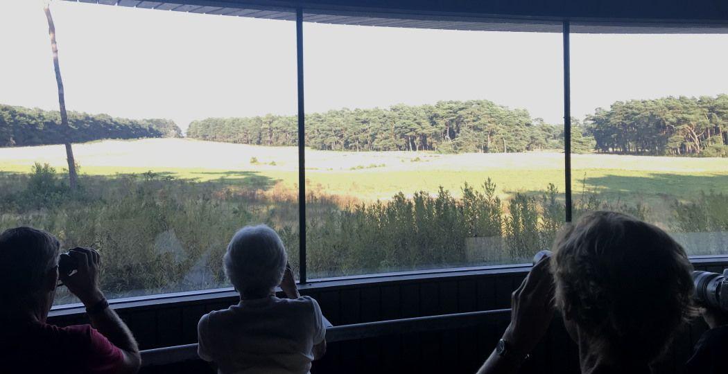 Geduldig wachten tot er misschien een hert of ree de wildweide op komt. Foto: DagjeWeg.NL