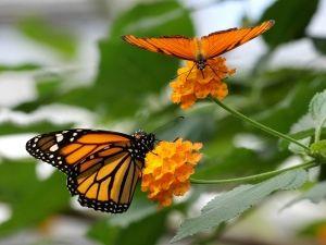 Wandel door de vlindertuin. Foto: De Passiflorahoeve.