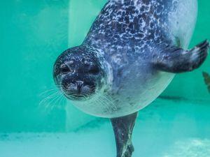Foto: Zee Aquarium © Lyone Peperkamp