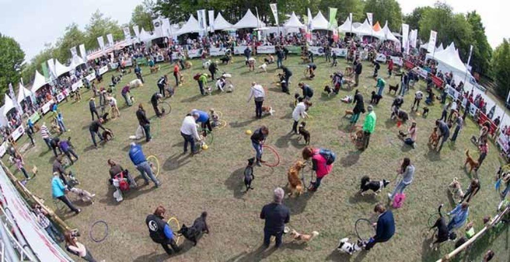 Demonstraties, wedstrijden: de dieren staan in de spotlights! Foto: Animal Event