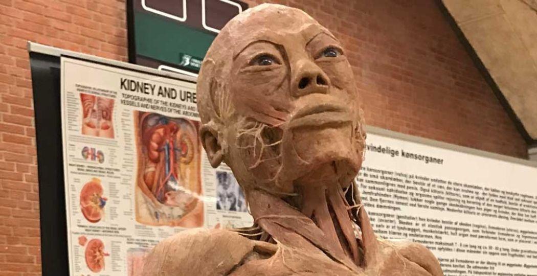 Real Human Bodies: 200 echte lichamen in Vlissingen. Foto: Real Human Bodies, Primetime Exhibition Las Vegas