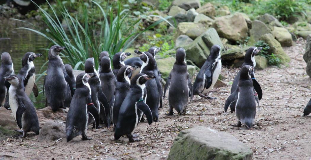 Vermijd drukte, dat is het devies. Ook in de dierentuin. Foto: DagjeWeg.NL, Coby Boschma