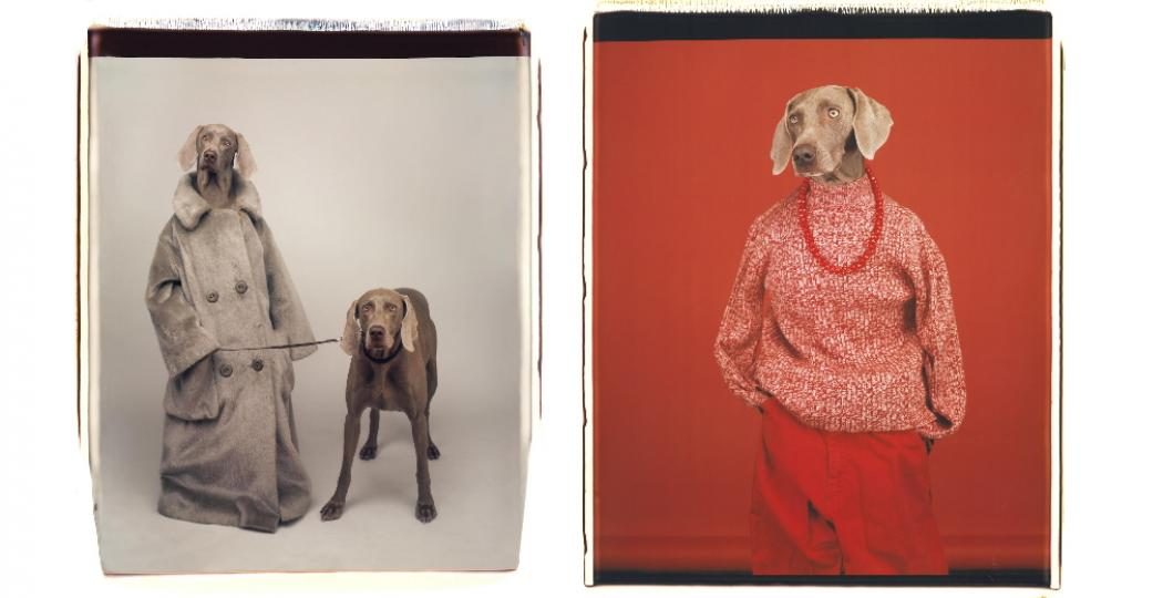 Links: Dog Walker, 1990, Color Polaroid. © William Wegman. Courtesy of the artist. Rechts: Casual, 2002, colour polaroid. © William Wegman. Courtesy of the artist. Beelden via Fotomuseum Den Haag