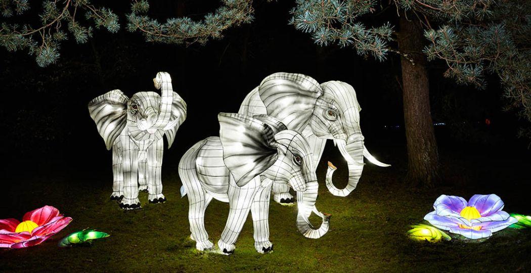 Bezoek Africa by Light: The Fantasy Edition vanaf 9 december 2016 tot en met 22 januari 2017 bij Safaripark Beekse Bergen. Foto: Africa by Light.