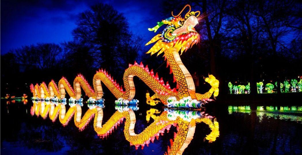De draak van veertig meter lang is het pronkstuk van China Light. Foto: © ZOO Antwerpen