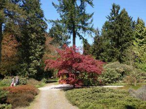 Foto: Nationaal Bomenmuseum