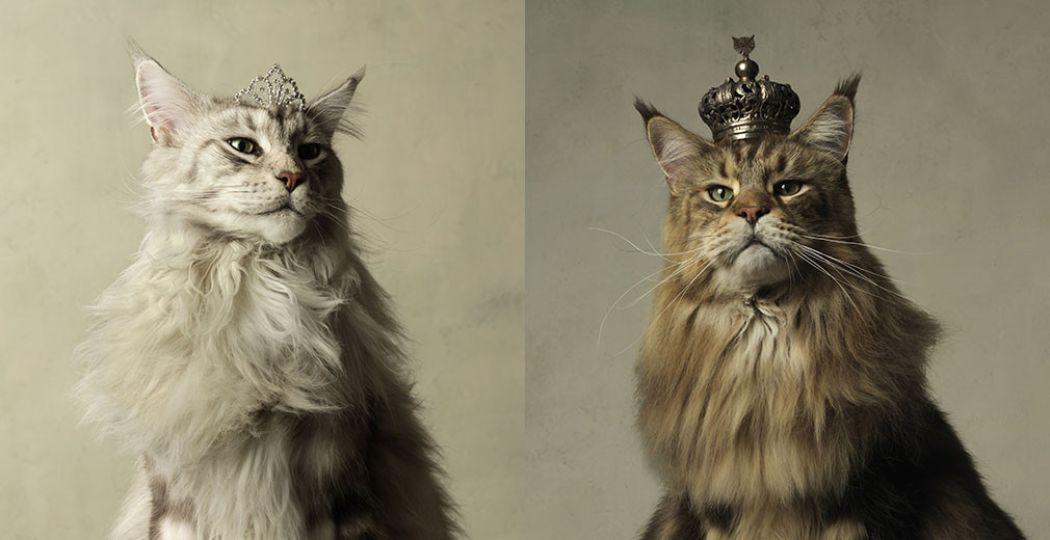 Koninklijke katten. Foto: Kunsthal © Marie Cécile Thijs, Her Majesty, 2011 (links). Foto: Kunsthal © Marie Cécile Thijs, His Majesty, 2011 (rechts).