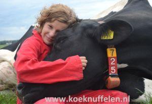 Knuffel met koeien