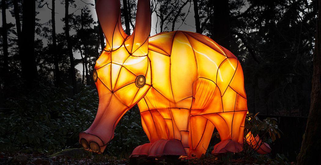 Leg een betoverende lichtroute af door Burgers' Zoo. Foto: Burgers' Zoo.