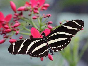 Foto: Vlindertuin Vlindorado