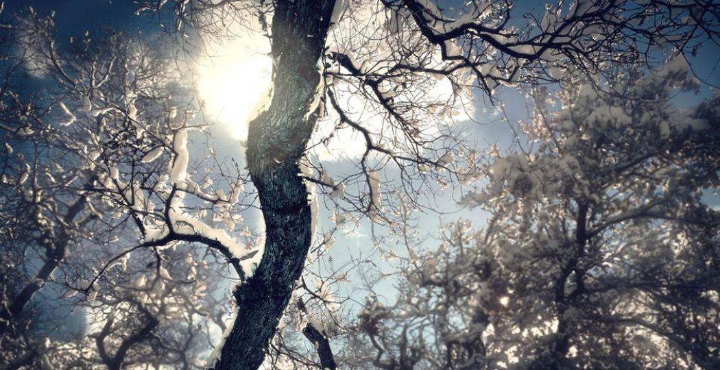 Sluit 2016 af of begin het nieuwe jaar met een frisse, winterse wandeling. Inclusief oliebollen en warme chocolademelk! Foto:  Pexels.com .