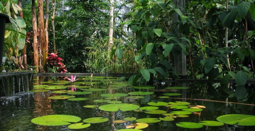 Geniet van exotische en tropische uitjes, dan is het altijd zomer! Bezoek bijvoorbeeld een subtropische tuin. Foto: Botanische Tuinen Universiteit Utrecht.