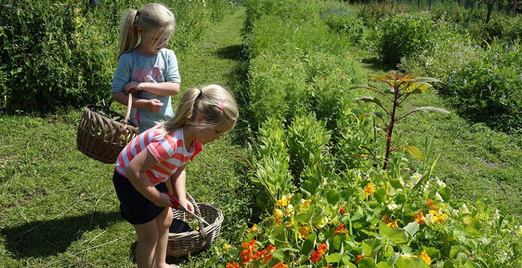 Leuk met de kids: een dagje naar een pluktuin. Foto: Redactie DagjeWeg.NL.