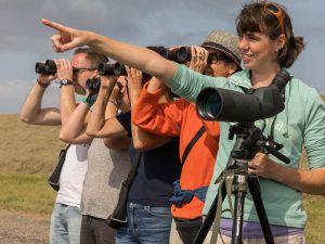 Ontdek de natuur van Schiermonnikoog. Foto: Bart Sikkema.