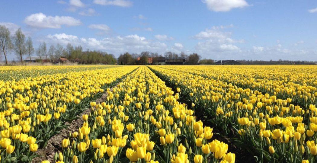 Wandel over het Tulpenbelevingsveld. Foto: Margot Maljaars.