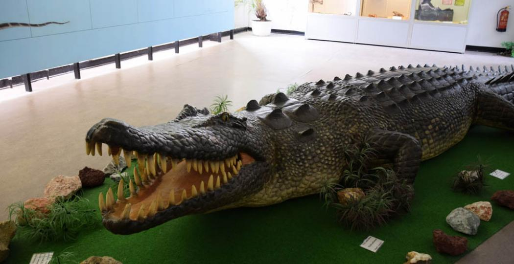 De grootste krokodil ter wereld; helaas (of juist: gelukkig!) nep in Reptielenzoo Iguana. Foto: DagjeWeg.NL