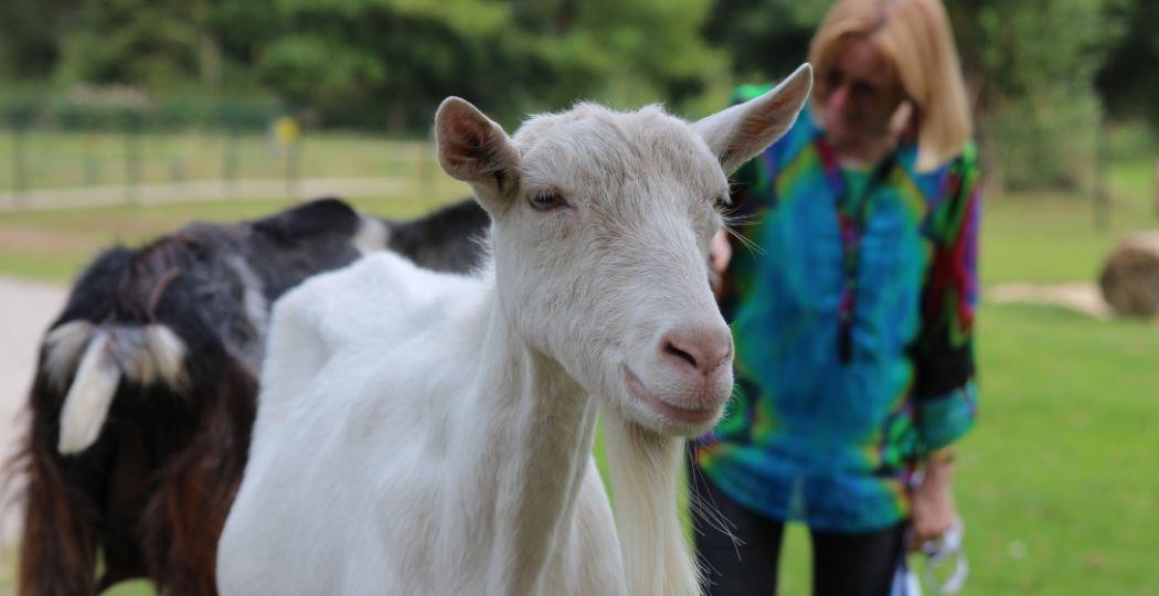 Een dagje uit tussen de dieren! Van expo's over dieren tot kinderboerderijen vol aaibare beestjes. Foto: DagjeWeg.NL, Coby Boschma.