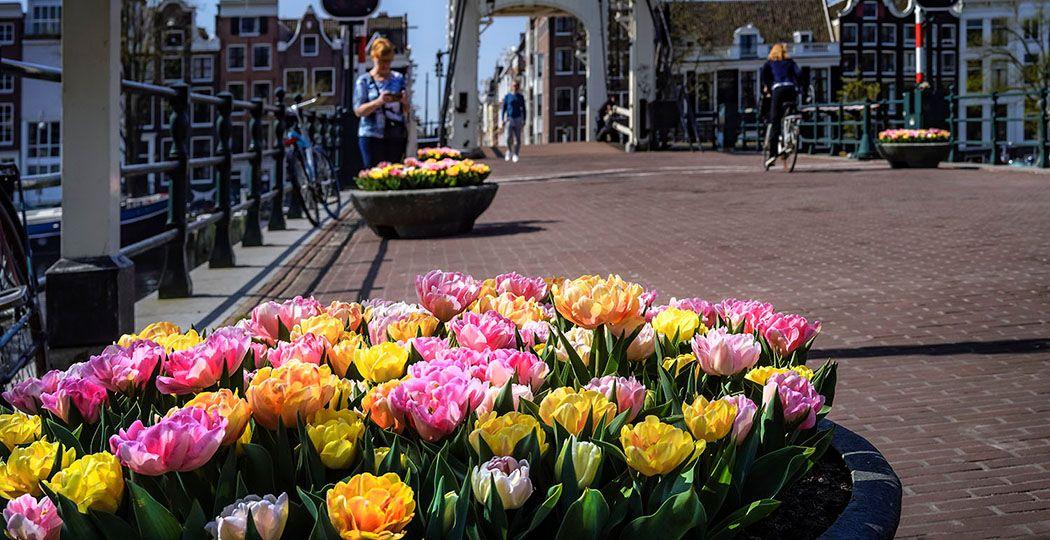 Krijg een echt lentegevoel tijdens het Tulp Festival in Amsterdam! Foto: Tulp Festival © John Lewis en Daniël Marshall