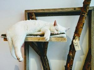 Foto: Pebbles Kitty Cat Café.