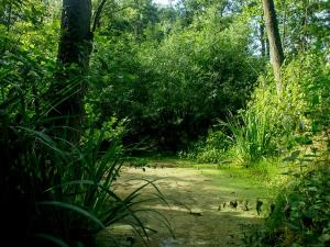 Wandelen door het groen. Foto: Wandelpark Caprera.
