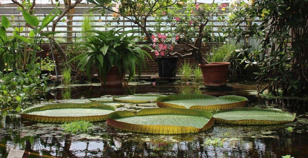 Bezoek bijvoorbeeld een tuin, zoals de Belevingstuin in Breda en de Botanische tuinen van de Universiteit van Utrecht. Foto: Redactie DagjeWeg.NL.