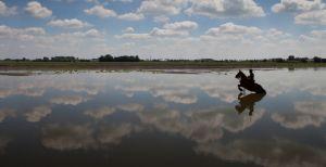 Verdedigingsmuur van Water: ontdek de Hollandse Waterlinie