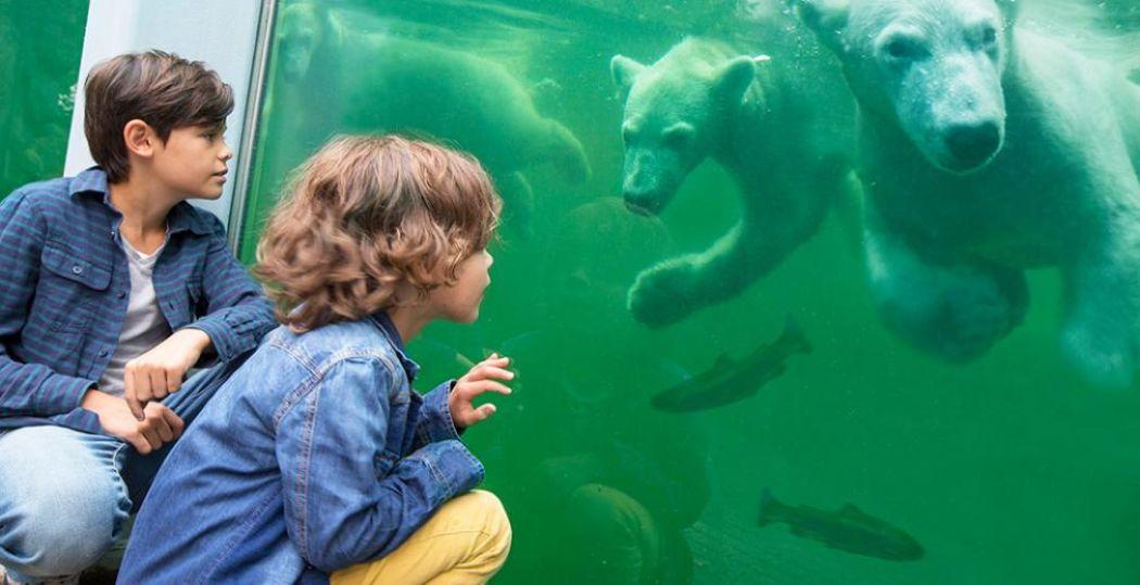 IJsberen kijken in Ouwehands Dierenpark. Foto: Ouwehands Dierenpark