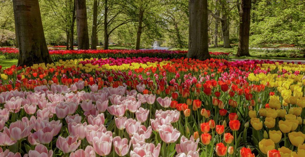 Een leeg maar prachtig park. Foto: Keukenhof.