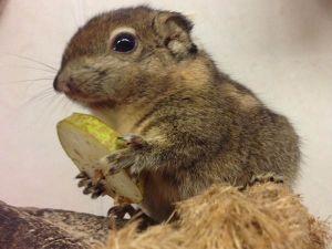 Voer de eekhoorntjes.