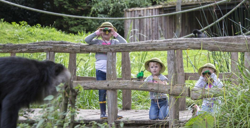 Dieren kijken in een dierentuin is altijd wel een hit bij peuters en kleuters. Zeker in een dierentuin als ZooParc Overloon, waar ze ook tussen dieren kunnen lopen. Foto: ZooParc Overloon © Arjan van Bruggen