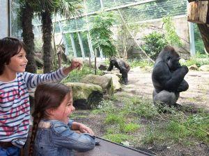 Reuzenpanda's in Ouwehands Dierenpark!
