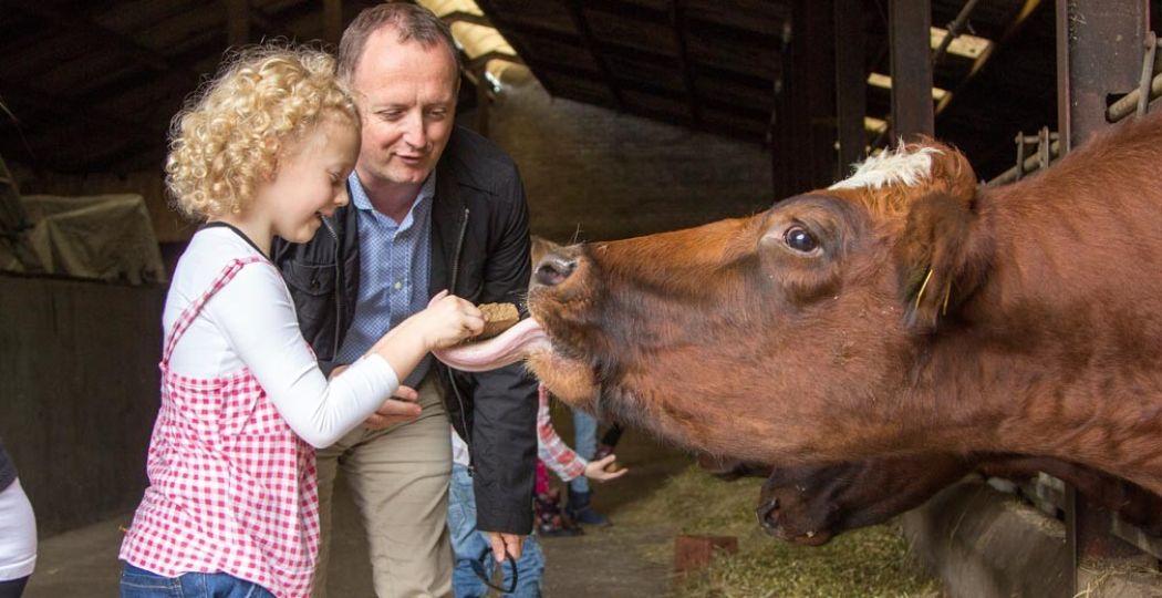 Voel de kriebelende snoet en de ruwe tong van de koe als je hem voert. Foto: De Steenuil.