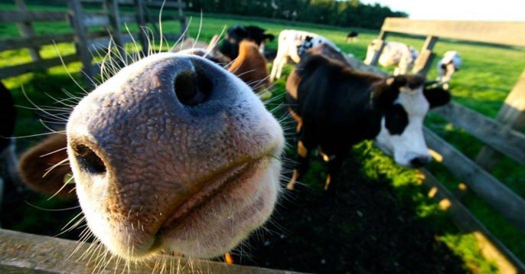 Welkom op de boerderij! Foto:  JeroenBennink / Flickr