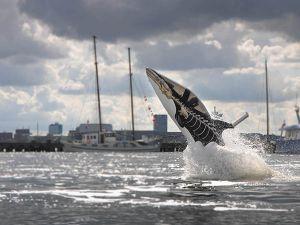 Foto: SkyShark Experience © Jurg van der Vlies.